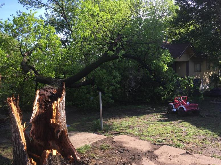 Tree falls and blocks entry to home High winds topple tree blocking entry to home in Dallas/oak cliff